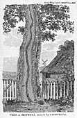 Engraving of a tree split by lightning
