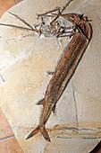 Prehistoric fossils