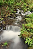 Rushing water and new spring growth