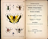 1827,1839,Collecting British Insects