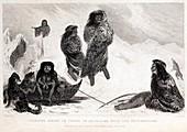 Fuegians from Darwin's Beagle voyage