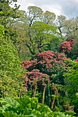 The Lost Gardens of Heligan,UK