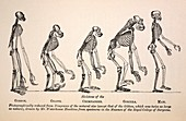 1863 Huxley from Ape to Man evolution