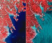 Effects of 2011 tsunami,Japan