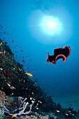 Marine flatworm