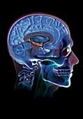 Human head,artwork