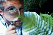 Botanist examining a fern