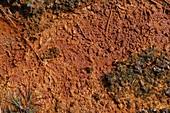 Close-up of contaminated land