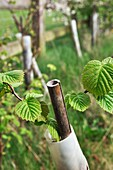 Saplings planted on reclaimed land
