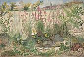 Heathland plants,artwork