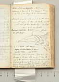 Wallace's expedition notes,1850s