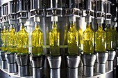 Olive oil production,Italy