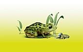Vegas Valley leopard frog,artwork