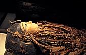 Amenhotep I mummy,Egypt