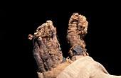 Ramases IV mummy,Egypt
