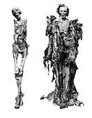 Egyptian mummies,Egypt