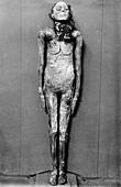 Egyptian mummy,Egypt
