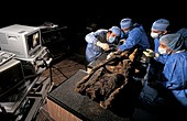 Egyptian mummy analysis,Italy