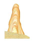 Stalagmite layers