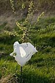 Hawthorn and plastic bag