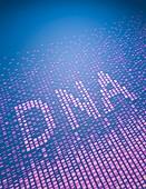 DNA fingerprinting,sequence of bases