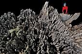 Phytokarst rock formation