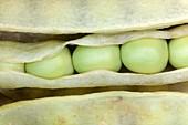 Five peas in a pod