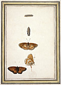 Butterfly lifecycle,artwork