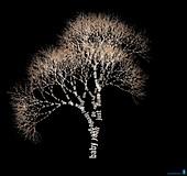 Song lyrics visualised as a tree