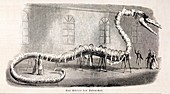 1846 Hydrarchos whale fake monster fossil