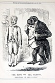 1861 Punch Gorilla Cartoon