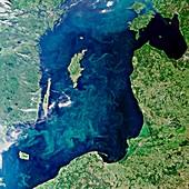 Baltic Sea algal bloom,2010