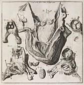 Heart disease,18th century