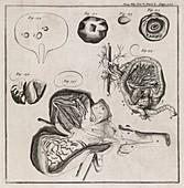 Biological illustrations,18th century