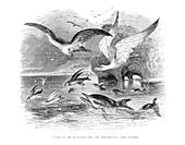 Marine predators hunting fish,1846