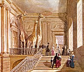Natural history at Montagu House,1845