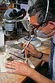 Baryonyx fossil laboratory work,1983