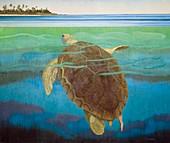 Marine turtle,artwork