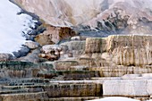 Mineral terraces,Mammoth Hot Springs