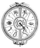 Vegetable hygrometer,19th century