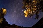 Milky Way over trees,Armenia