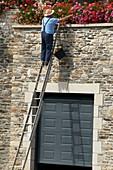 Gardener using a ladder