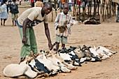 Livestock market,Mozambique
