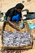 Fish seller,Malawi