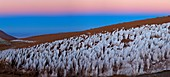 Andean ice field at dawn