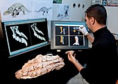 Dinosaur research,3D imaging