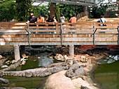 Visitors at a crocodile farm
