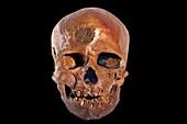 Cro-magnon fossil skull