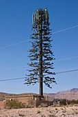 Cellphone mast disguised as tree