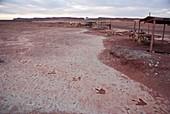 Dinosaur footprints in Arizona